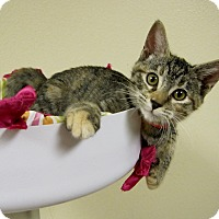 Adopt A Pet :: Jamie - Georgetown, TX