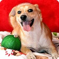 Adopt A Pet :: Mani - Okeechobee, FL