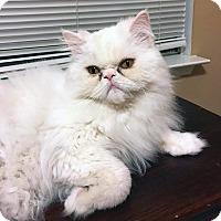 Adopt A Pet :: Baby - Arlington/Ft Worth, TX