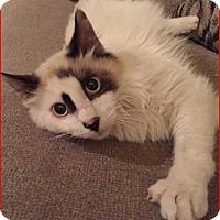 Adopt A Pet :: Ned - Denver, CO