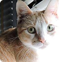 Adopt A Pet :: Queen - Saanichton, BC