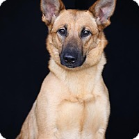 Adopt A Pet :: Gumdrop - SAN PEDRO, CA