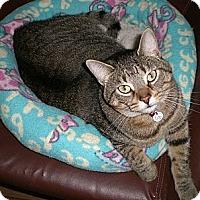 Adopt A Pet :: Tater - Byron Center, MI