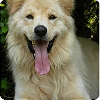 Adopt A Pet :: Goliath - Hagerstown, MD