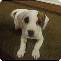 Adopt A Pet :: Gidget - Cumming, GA
