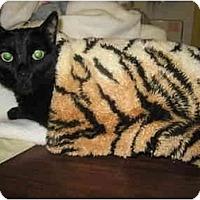 Adopt A Pet :: Buffalo - Mission, BC
