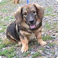 Adopt A Pet :: COME MEET Ralphie - Westport, CT