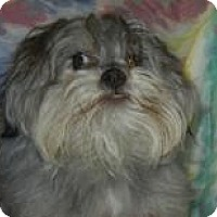Adopt A Pet :: Luciano Pupparotti  ADOPTED!! - Antioch, IL
