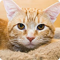 Adopt A Pet :: Pumpkin - Irvine, CA
