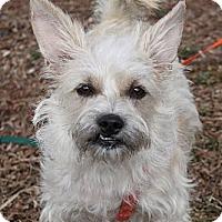 Adopt A Pet :: Ariel - Louisville, KY