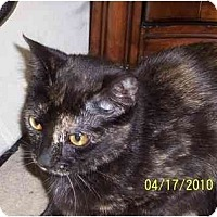 Adopt A Pet :: Lenore - Alexandria, VA