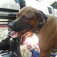 Adopt A Pet :: Ernie - Nashua, NH