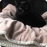 Adopt A Pet :: Diana - Vancouver, BC