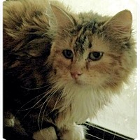 Adopt A Pet :: Marigold - Ennis, TX
