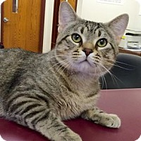Adopt A Pet :: Russell - Muscatine, IA