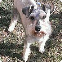 Adopt A Pet :: Jaxon - Laurel, MD