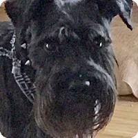 Adopt A Pet :: Trooper - St Louis, MO