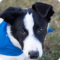 Adopt A Pet :: Wesley - Patterson, CA