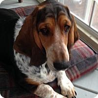 Adopt A Pet :: Lola - Columbia, SC