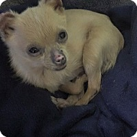 Adopt A Pet :: Sparkle - San Francisco, CA
