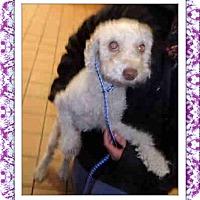 Adopt A Pet :: Adopted!!Giselle - IL - Tulsa, OK