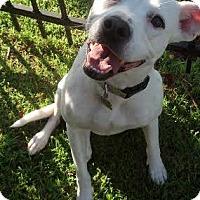 Adopt A Pet :: Francis - Baton Rouge, LA