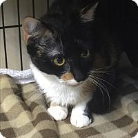 Adopt A Pet :: Gretchen - Medford, MA