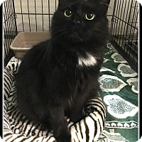 Adopt A Pet :: Kiki - Atlanta, GA