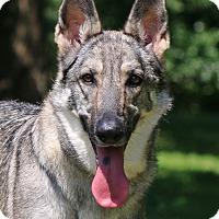 Adopt A Pet :: Nala-Bea - Nashville, TN