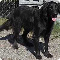 Adopt A Pet :: Jada - Manning, SC