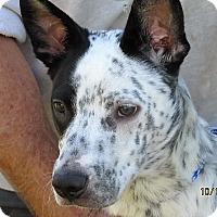 Adopt A Pet :: Oscar - Germantown, MD