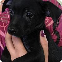 Adopt A Pet :: MORK - Lakewood, CA
