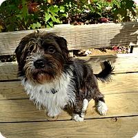 Adopt A Pet :: Odie - Broadway, NJ