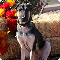 Adopt A Pet :: CHAROLET - Phoenix, AZ