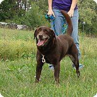 Adopt A Pet :: Ginger - Cameron, MO