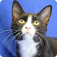 Adopt A Pet :: Johnny - Winston-Salem, NC