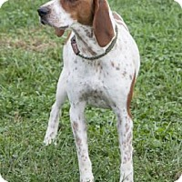 Hound (Unknown Type) Mix Dog for adoption in Bedford, Indiana - Jackie