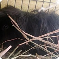Adopt A Pet :: Benny - Lowell, MA