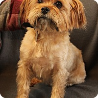 Adopt A Pet :: Zeke - O Fallon, IL