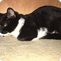 Adopt A Pet :: Chong - Chula Vista, CA