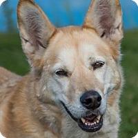 Adopt A Pet :: Zoey - Loxahatchee, FL