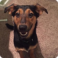 Adopt A Pet :: Fancy - ST LOUIS, MO