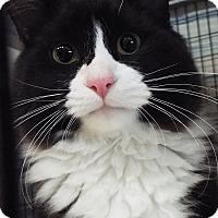 Adopt A Pet :: Ham - Grants Pass, OR
