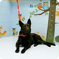 Adopt A Pet :: Alexa - Kouts, IN