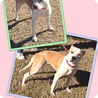 Adopt A Pet :: Kiki - Scottsdale, AZ