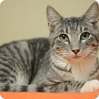 Adopt A Pet :: Aaron170287 - Atlanta, GA