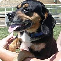 Adopt A Pet :: Tosh - Huntingburg, IN