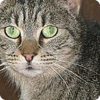Adopt A Pet :: Crazy - Chesterfield, VA