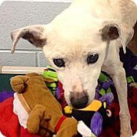 Adopt A Pet :: Abigail - Muskegon, MI