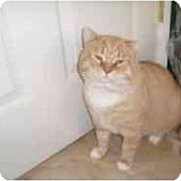 Adopt A Pet :: Mr. Tom - Hamburg, NY